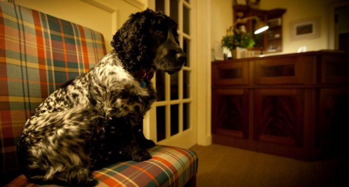 Arguing The Case For Pet-Friendly Hotels