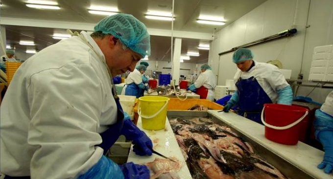 Seafish Premieres New Processing Film in Scotland