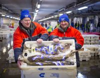 Scottish Seafood Takes the Stage at Brussels Seafood Expo