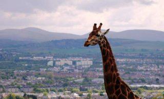 Restaurant Associates Announce Edinburgh Zoo Contract Extension